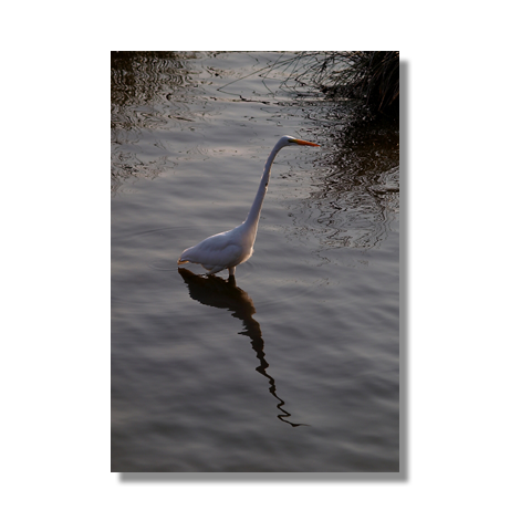 Tip Toe Canvas Print