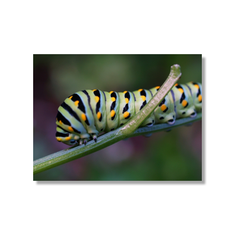 Caterpillar in Motion Canvas Print