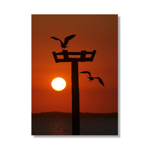 Into The Sun Canvas Print