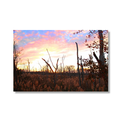 Marsh At Sundown Canvas Print